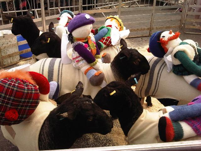 the racing sheep